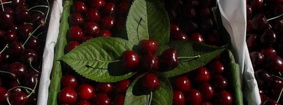 CHERRIES_ZIRAAT_0900_also_called_Turkish_Napoleon_.jpg